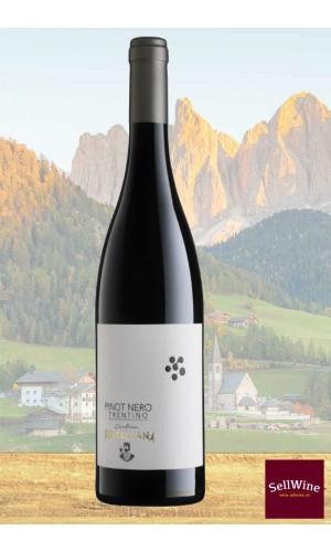 SellWine-Cantina Rotaliana Pinot Nero Trentino DOC 2017